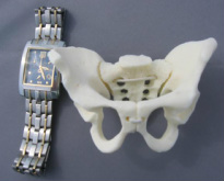 Small Flexible Pelvis  - Hesch Anatomical Products